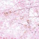 April.07①入学式と通常授業再開